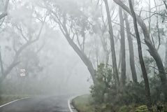 Trees surrounded by fog - Blue Mountains, Australia Royalty Free Stock Photo