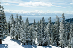 Trees surrounding Lake Tahoe. View from the top of the mountain at lake Tahoe Stock Photos