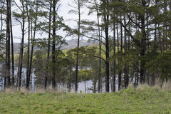Trees Surrounding the Myponga Reservoir, South Australia Stock Photography