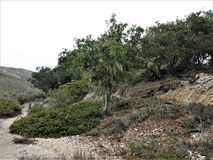 Trees Surrounding the Rocky Hill. At Montana de Oro State Park, Los Osos, California Royalty Free Stock Photo