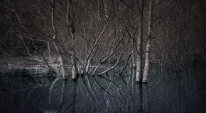Trees in a swamp. In sepia and blue stock image