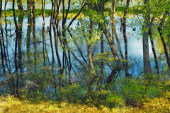 Trees in the swamp. Flood waters of Narew river in Poland stock photo