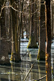 Trees in the swamp. Royalty Free Stock Photography