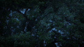 Trees Swaying In Stormy Weather In The Evening. Tree branches moving around in storm winds stock video