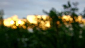 Trees swaying by the wind in the city during sunset blurred stock video footage