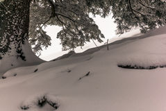 Trees in the Swiss Alps under an heavy snowfall - 16 Royalty Free Stock Images