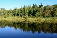 Trees symmetric reflection in a river Stock Photos