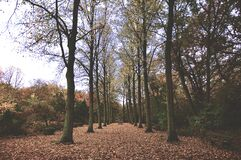 Trees Symmetry Royalty Free Stock Images
