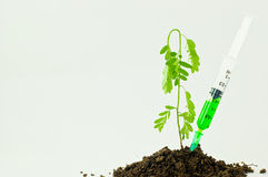 Trees and syringes And green potion Royalty Free Stock Photos