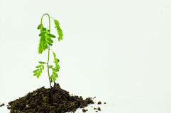 Trees and syringes And green potion Royalty Free Stock Images