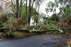 Trees take down electric wires suring Super Storm Sandy. A neighborhood has their power knocked out from trees falling on the wires after Hurricaine Stock Photography