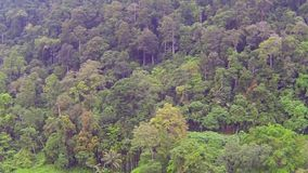 Trees in Thai jungle, aerial video stock video footage