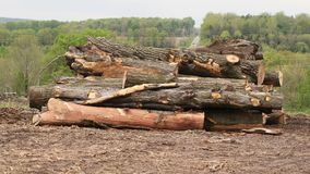 Free Trees That Have Been Felled And Cut Into Logs To Clear Land For New Development Stock Photography - 103129932