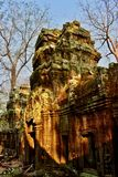 Ta Prohm temple, Siem Reap, Cambodia royalty free stock images