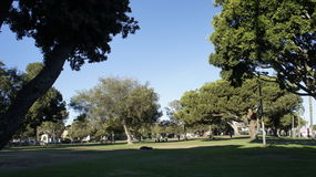 The TREES. There are number of trees that can be seen at the Belmont Park in Ocean Boulevard, Long Beach, CA Royalty Free Stock Image
