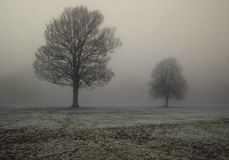 Trees in thick fog Stock Photo