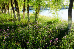 The trees and thick growth of grass Royalty Free Stock Photos