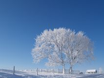 Frosty trees Stock Images