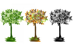 Trees, three annual periods Stock Photography