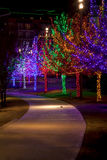 Trees tightly wrapped in LED lights for the Christmas holidays Royalty Free Stock Images