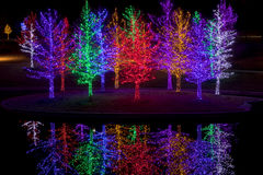 Trees tightly wrapped in LED lights for the Christmas holidays Stock Photos