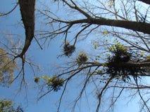 Trees till skyen Royaltyfria Foton