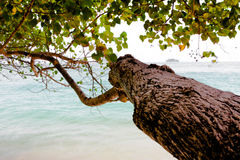Trees to the sea. Royalty Free Stock Photos