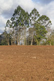 Trees in a Tobacco farm Stock Images
