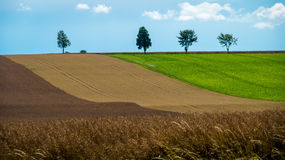 Trees on top of a hill. Trees on a hill with colored crops Royalty Free Stock Photos