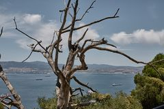 Trees on the top of the rock of gibraltar royalty free stock photos