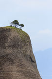 Trees on the top of rock in Meteora Royalty Free Stock Photography