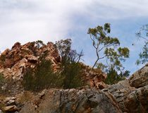 Trees on the top of Stanley chasm. Stanley chasm in the West McDonnell ranges in the Northern Territory in Australia Royalty Free Stock Photography