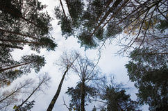 Trees top view Royalty Free Stock Photography