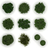 Trees from top view. Different trees from top view ( on white background Royalty Free Stock Photos