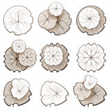 Trees - top view Stock Images