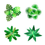 Trees top view for landscape vector illustration. On white background stock illustration