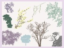 Trees tracing. Set of natural tree and branches tracing silhouettes Stock Photos