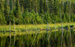 Trees in transition refections Royalty Free Stock Photos