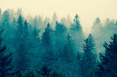 Trees In Transylvania's Foggy Mountains. Blue Forest View in Transylvania`s foggy mountains Royalty Free Stock Photography