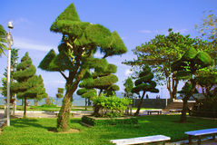 Trees trimmed as different geometric shapes. In a city park in Nha Trang Vietnam Royalty Free Stock Photography