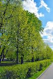Trees, trimmed bushes and road. Fresh bright greens and blue sky with clouds. Park in the spring or summer stock photo