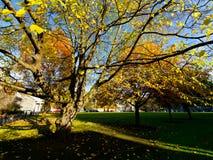 Trees at Trinity College. Dublin, Ireland Royalty Free Stock Photos
