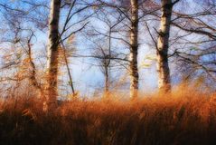 Trees. Trio of trees in summer breeze Royalty Free Stock Photo