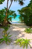 Trees on tropical beach Stock Photos