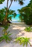 Trees on tropical beach Stock Photos