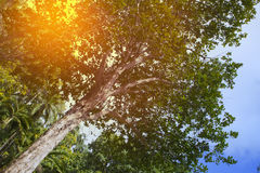 Trees of tropical climate, bottom view Stock Images