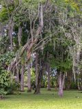 Trees at a tropical garden typical from the warm climate. Captured at the Andean mountains of southern Colombia royalty free stock photography