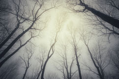 Trees trough fog in haunted forest Stock Photos