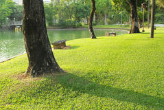 Trees trunk and green grass field. Trees and green grass field in the park Stock Images