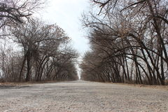Trees tunnel. Asphalt Road in a Trees tunnel Stock Image